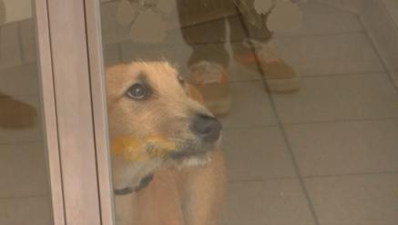 ペットショップでの犬猫の販売を禁止し、新しく飼う際には保健所や保護センターなどから引き取る制度を作ってほしい